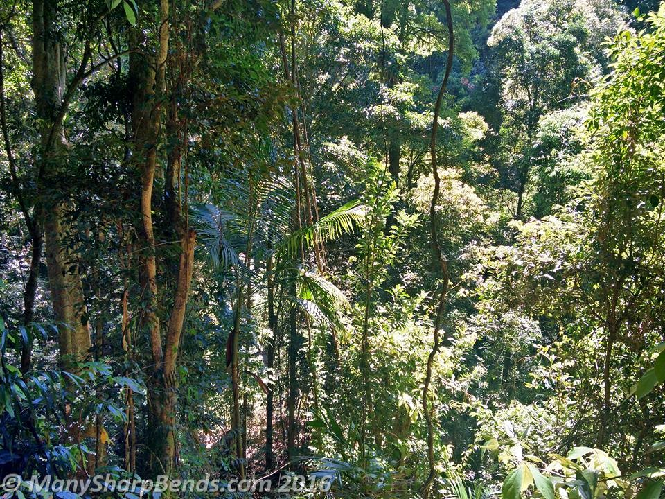 springbrook-rainforest